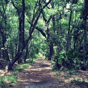 Bike Trails in Savannah Skidaway State Park